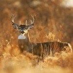 subsistence-hunting-1